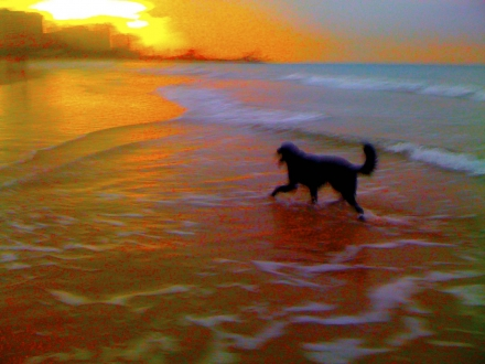 My dog Sergei on San Juan's Isla Verde Beach